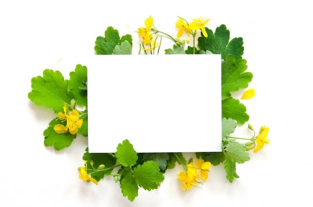 Il celidonia fiorisce con spazio per testo su libro bianco