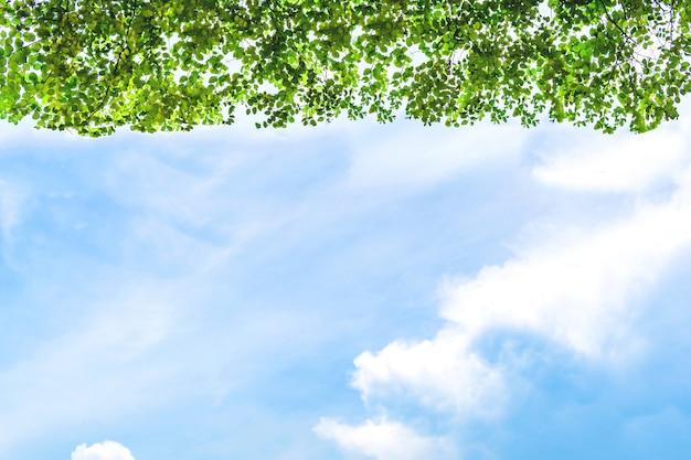 Il cielo è luminoso e le foglie sembrano belle. quello è usato come sfondo.