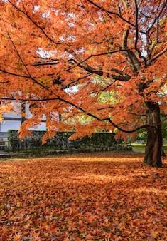Il colore rosso di autunno va al tempio di tofukuji a kyoto, giappone