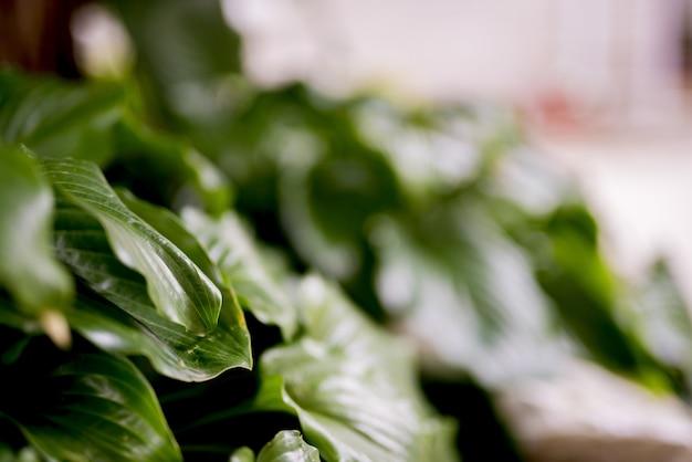 Il colpo del primo piano della pianta verde va con un fondo vago
