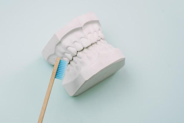 Il concetto di come lavarsi correttamente i denti. frantoio di denti di bambù si trovano su uno sfondo blu e accanto al modello in gesso della mascella umana. ortodontista per cure orali.