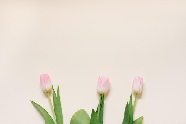 Il concetto di una mattina di primavera. tulipani rosa su uno sfondo bianco, vista dall'alto con spazio per il testo. biglietto di auguri per la festa della mamma, san valentino, 8 marzo