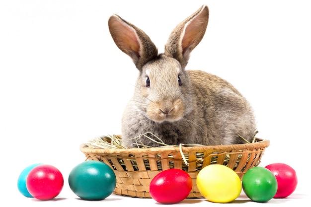 Il coniglietto di pasqua grigio si siede in un canestro, isolato, spazio in bianco per la festa di pasqua, concetto a pasqua.