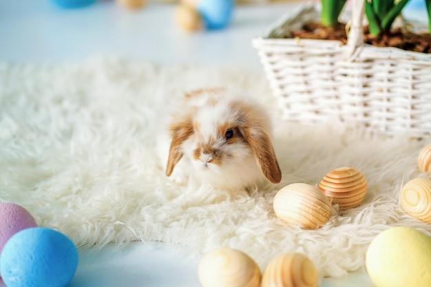 Il coniglio nella pasqua ha decorato la stanza con le uova dipinte