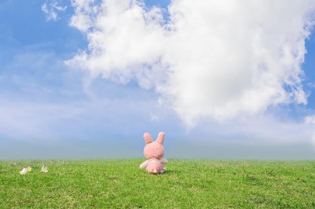 Il coniglio si siede sull'erba verde è dietro con il fondo del cielo blu per il festival felice di pasqua