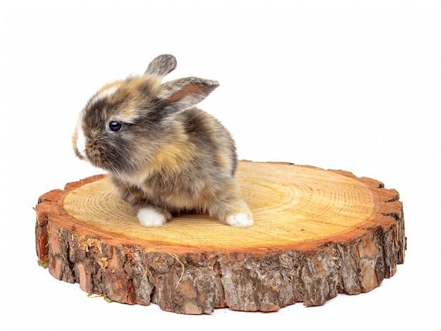 Il coniglio sveglio del bambino sulla sega di legno ha tagliato il pino