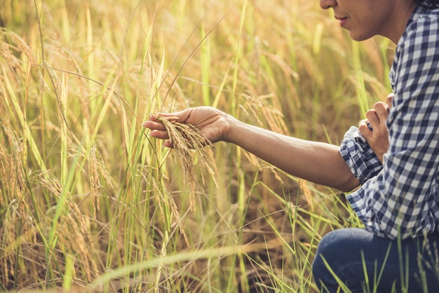 Il contadino tiene in mano il riso.