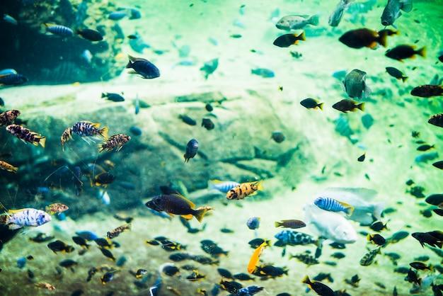 Il corallo pesca la scena subacquea