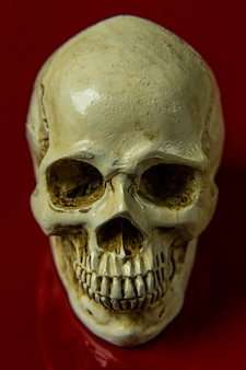 Il cranio sull'immagine astratta lucida del fondo rosso.