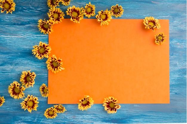 Il crisantemo fiorisce su carta arancio in bianco sopra i precedenti blu
