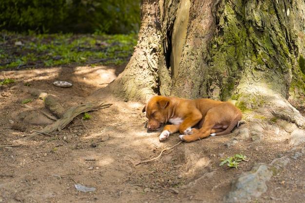 Il cucciolo dorme sulle radici di un albero.