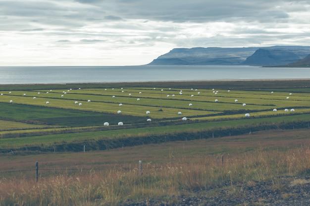 Il fieno bianco rotola su un campo verde dell'islanda.