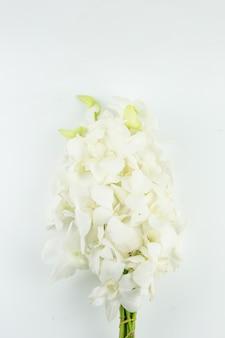 Il fiore bianco dell'orchidea del mazzo per prega il rispetto a buddha isolato su fondo bianco