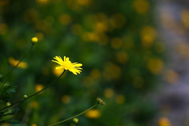 Il fiore che spicca
