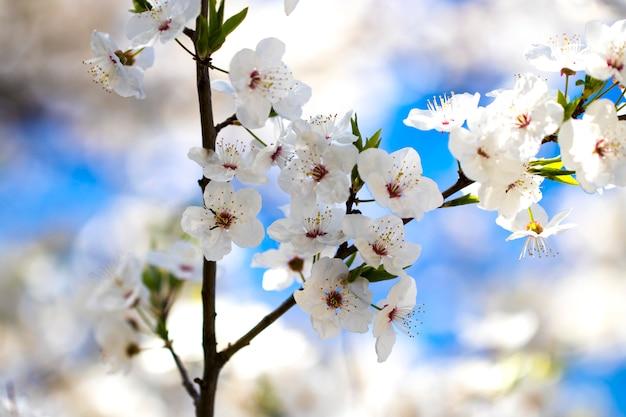 Il fiore fiorisce come fondo variopinto, macro foto