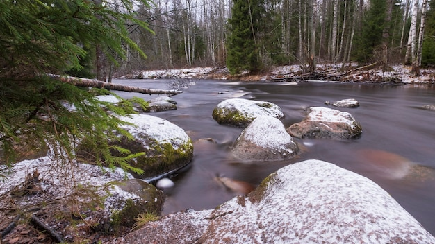 Il fiume roshchinka nel bosco di larici della nave lindulovskaya in inverno.