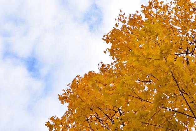 Il fondo di autunno si è diviso da un cielo blu nuvoloso e dalle foglie gialle dell'albero