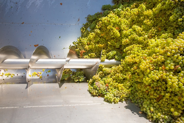 Il frantoio per cavatappi chardonnay è destinato alla vinificazione