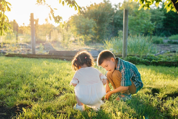 Il fratellino e la sorella stanno piantando piantine