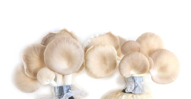 Il fungo dell'ostrica cresce dalla coltivazione.