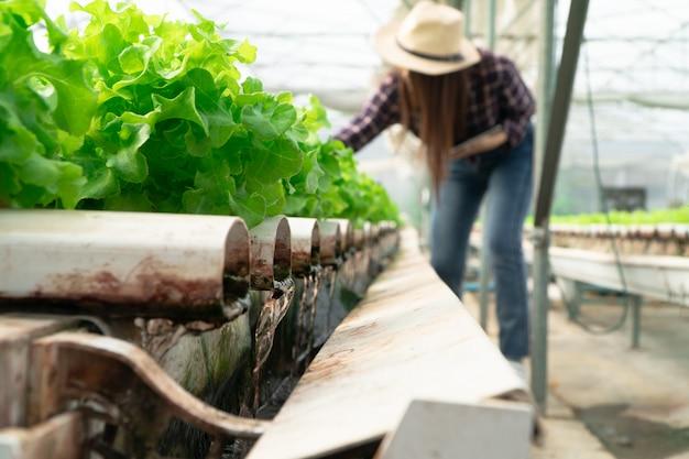 Il fuoco selettivo della tubatura dell'acqua nel sistema idroponico vegetale e l'agricoltore sta tenendo un tablet sta controllando la qualità