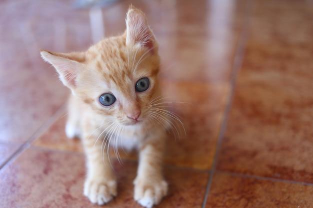 Il gattino curioso si siede sul pavimento.