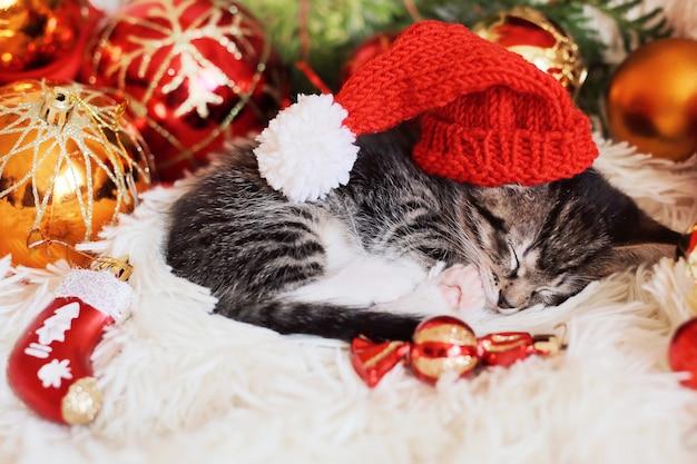 Il gattino divertente dorme in decorazioni rosse luminose di natale
