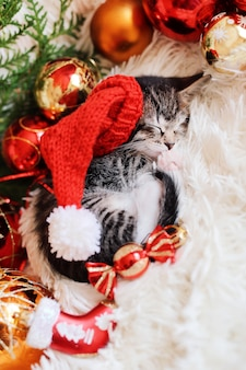 Il gattino dorme in decorazioni rosse luminose di natale.