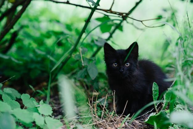 Il gattino nero senza tetto spaventato si siede da solo nell'erba.