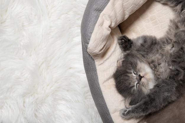 Il gattino sveglio nero sta dormendo. il gattino dorme con le gambe sollevate verso l'alto.