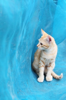 Il gatto a strisce arancio sveglio del gattino gode e si rilassa su rete blu in giardino con luce solare naturale
