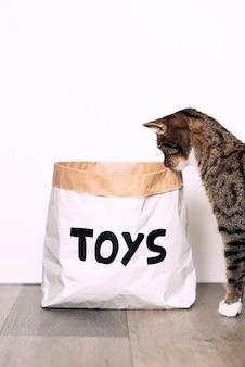 Il gatto a strisce divertente con guarda curiosamente il pacchetto del mestiere di carta con i giocattoli dell'iscrizione. animali domestici divertenti a casa.