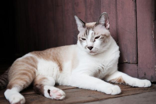 Il gatto a strisce grigio gode e si siede sul pavimento di legno in casa con luce solare naturale.