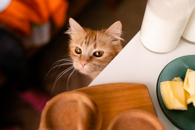 Il gatto affamato è sotto il tavolo, mentre le persone mangiano
