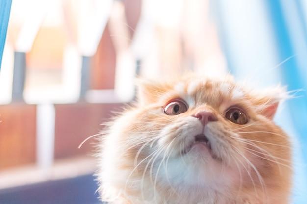 Il gatto alzò gli occhi verso la finestra. luce soffusa colorata