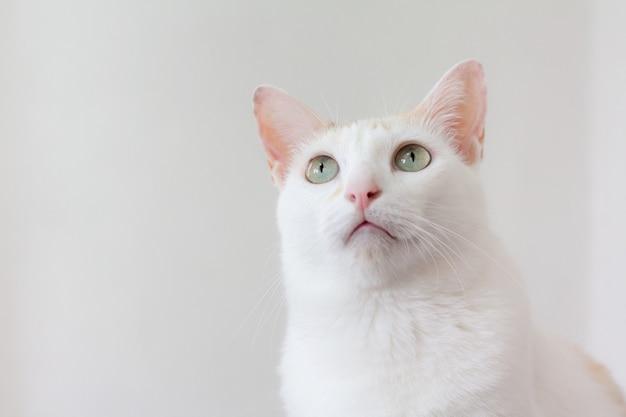 Il gatto alzò lo sguardo sopra di esso con curiosità e scetticismo.