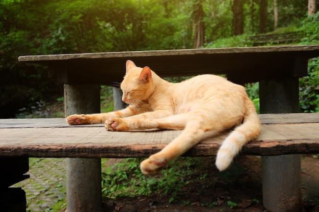 Il gatto arancio si rilassa e sleppy sul banco di legno nel parco