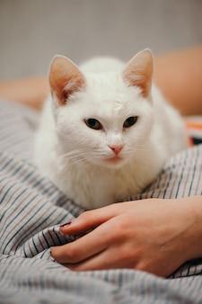 Il gatto bianco è sul letto.