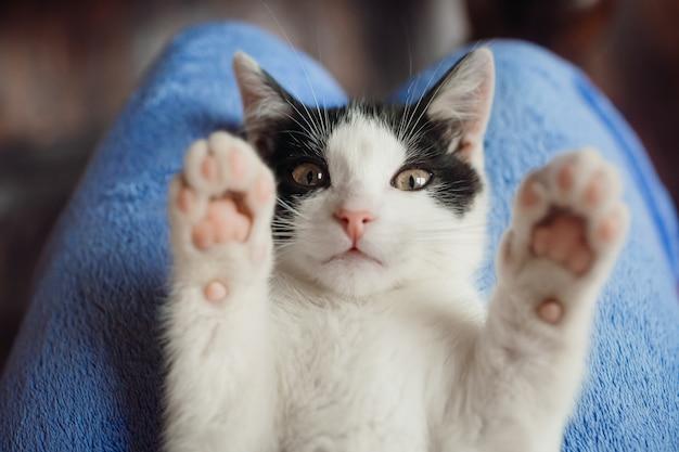 Il gatto bianco giace sulle ginocchia della donna