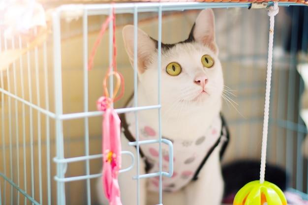 Il gatto bianco gode e si siede in scatola della gabbia con bella luce solare