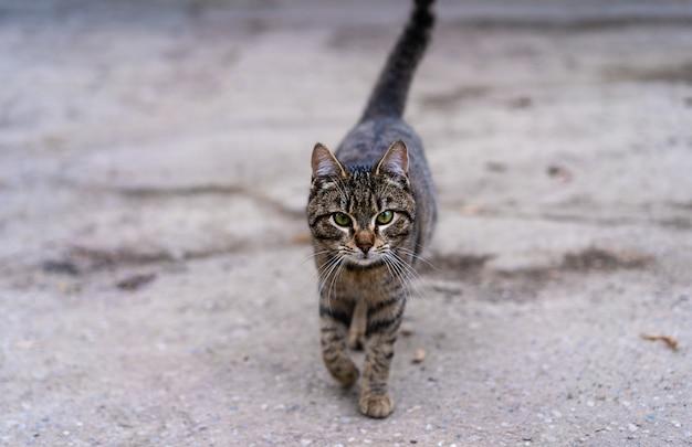 Il gatto cammina lungo la strada