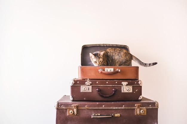 Il gatto curioso si siede su valigie vintage sullo sfondo di un muro chiaro. stile retrò rustico