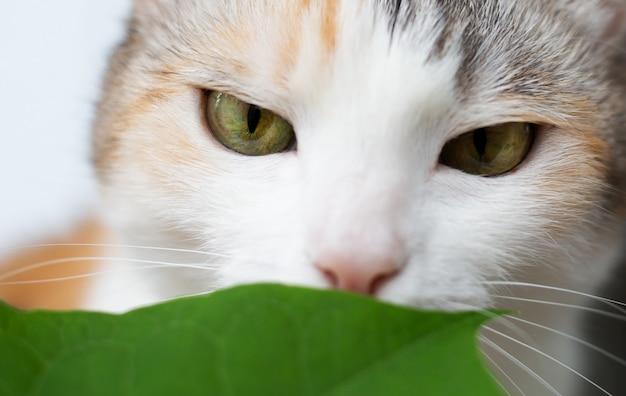 Il gatto del primo piano annusa le foglie verdi