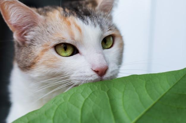 Il gatto del primo piano mangia le foglie verdi