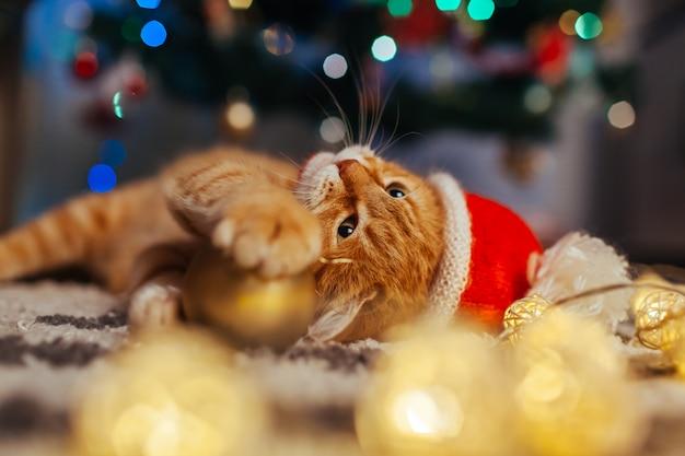 Il gatto dello zenzero indossa il cappello di babbo natale sotto l'albero di natale giocando con luci e palla. concetto di natale e capodanno
