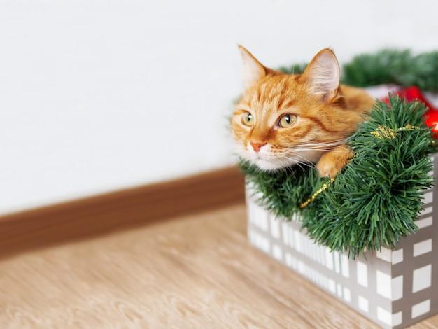 Il gatto dello zenzero si trova nella scatola con natale e decorazioni. l'animale lanuginoso sta dormendo lì.