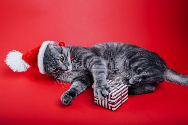 Il gatto di soriano grigio indossa il cappello di babbo natale su sfondo rosso e gioca con un contenitore di regalo.