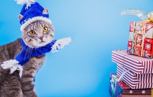 Il gatto di soriano grigio porta il cappello di santa su fondo blu dai contenitori di regalo.