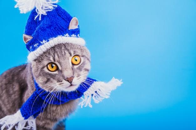 Il gatto di soriano grigio porta il cappello e la sciarpa di santa su fondo blu.