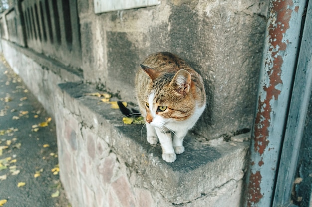 Il gatto di strada marrone bianco è in roaming dietro l'angolo della città.